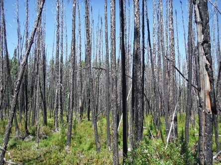Determinants of Wildfire Remnant Survival