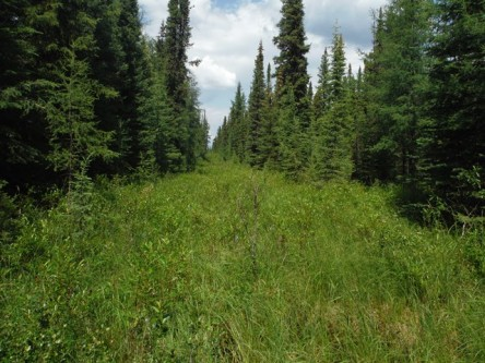 Analysis and restoration of seismic cutlines in Southern Mountain and Boreal caribou range in west-central Alberta