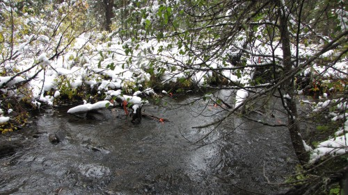 Understanding Large Woody Debris and  Development of a Decision Support Tool