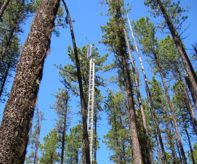 The mountain pine beetle in novel pine forests: Predicting impacts in a warming environment